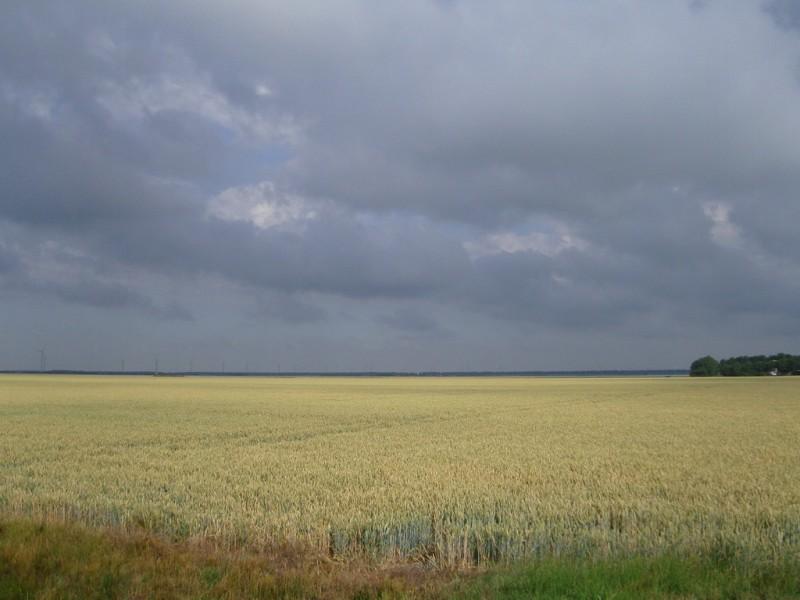 Centrale deel van de polder. Broedterrein voor kwartel en grauwe kiekendief. Foto gemaakt door Marius Bouscholte.